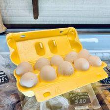 Яйца домашних кур