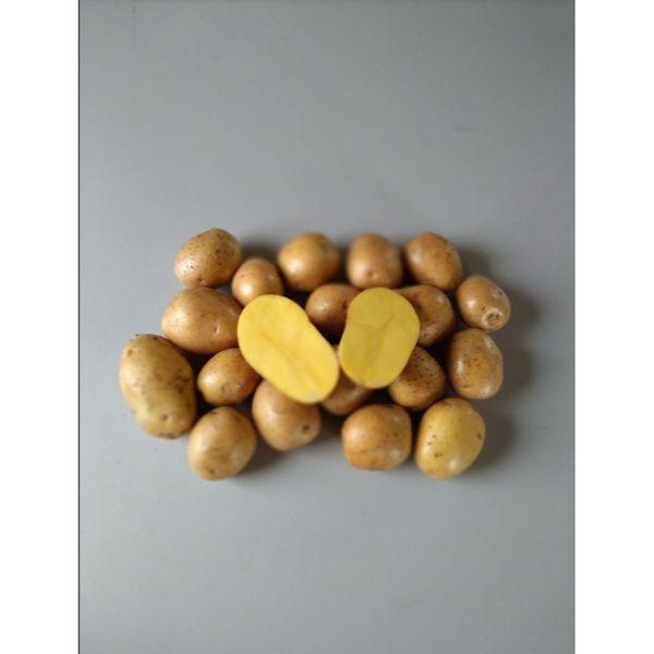 Картофель для варки