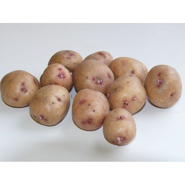 Картофель средний (краснокожурный)